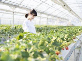 中小企業診断士の農業経営サポート